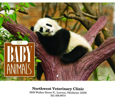 Baby Animals Wall Calendar - Stitched