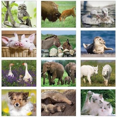 The Old Farmer's Almanac Baby Animals - Spiral