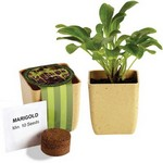 Picture of Flower Pot Set with Marigold Seeds
