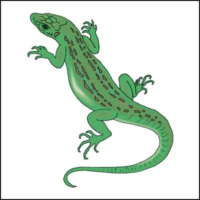 Gecko Stock Tattoo