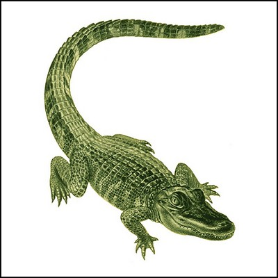 Alligator Stock Tattoo