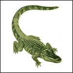 Picture of Alligator Stock Tattoo
