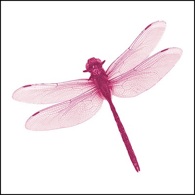 Dragonfly Stock Tattoo