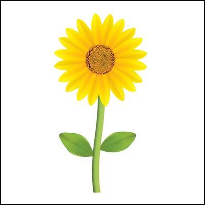 Sunflower Stock Tattoo